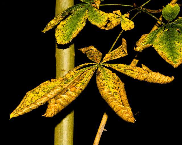 Autum-Leaves-03