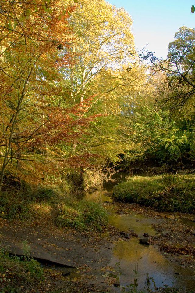 Plessey-woods-002