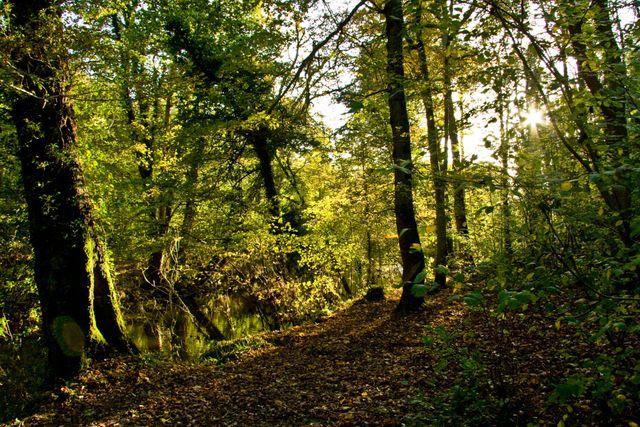 Plessey-woods-005