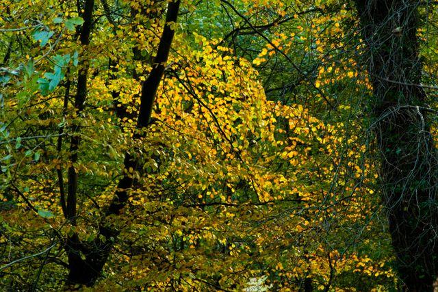 Plessey-woods-012