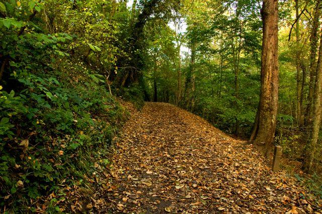 Plessey-woods-015