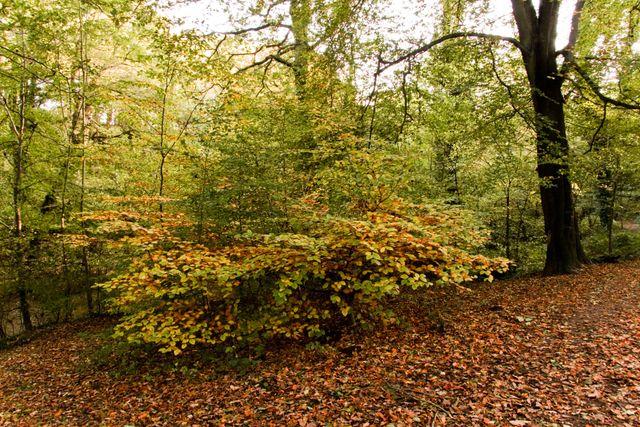 Plessey-woods-027