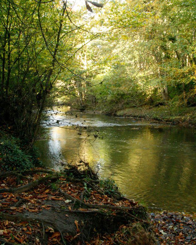 River-Wansbeck