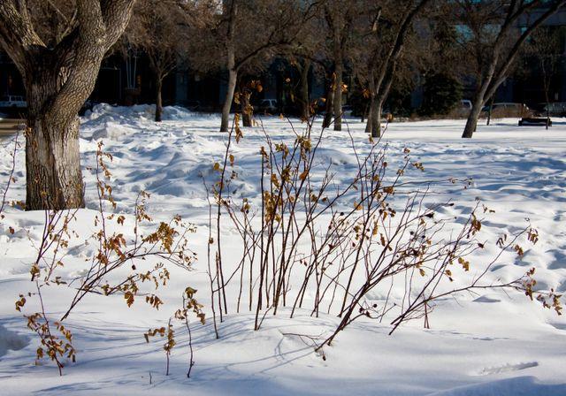 Winter-in-Regina-2