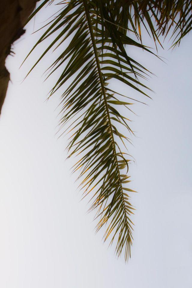 Dubai Palm Frond