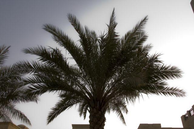 Dubai Shade